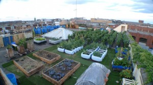 urban_farm_dublin_1-910x511